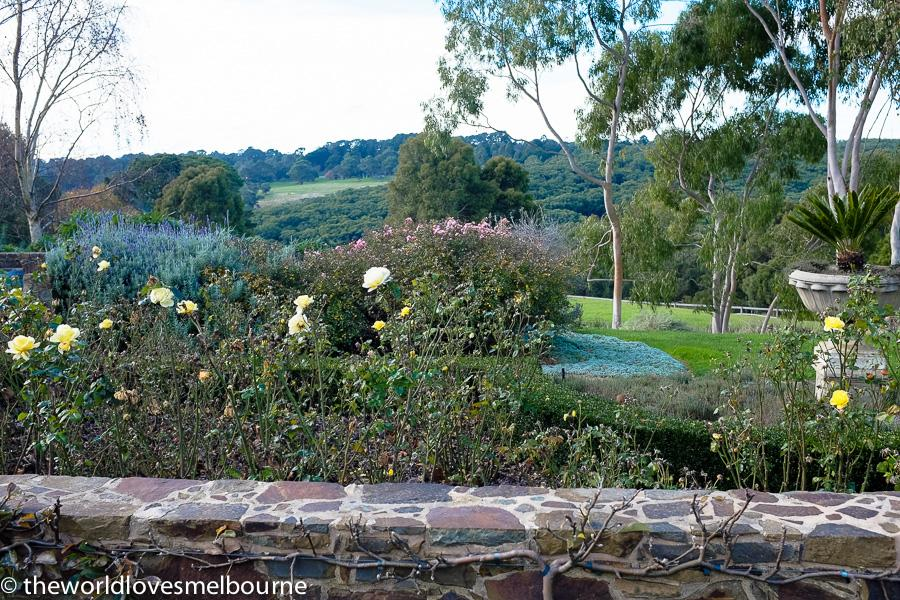 MorningtonWineCompass 48